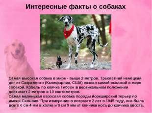 Интересные факты о собаках Самая высокая собака в мире - выше 2 метров. Трехл