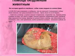 Вот история одной из спасённых собак этими людьми по кличке Шина «13.08.2012