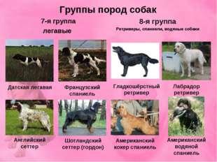 Группы пород собак 7-я группа легавые 8-я группа Ретриверы, спаниели, водяные