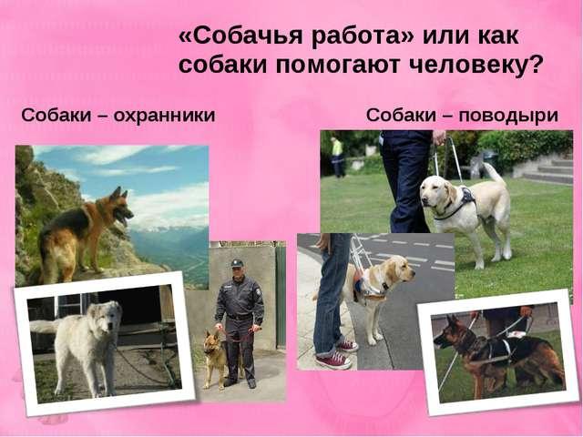 «Собачья работа» или как собаки помогают человеку? Собаки – охранники Собаки...