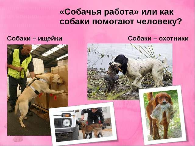 «Собачья работа» или как собаки помогают человеку? Собаки – ищейки Собаки – о...