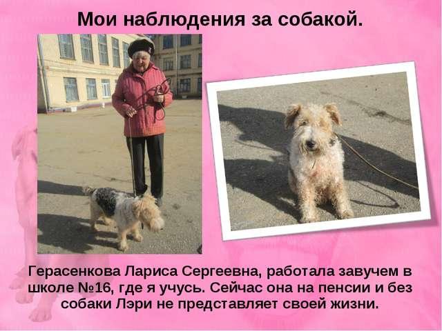 Мои наблюдения за собакой. Герасенкова Лариса Сергеевна, работала завучем в ш...