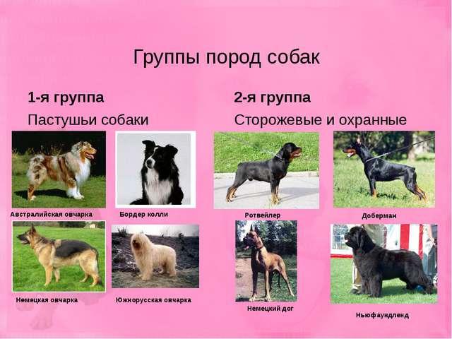 Группы пород собак 1-я группа Пастушьи собаки 2-я группа Сторожевые и охранны...