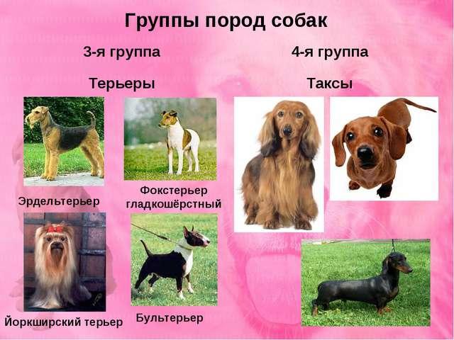 Группы пород собак 3-я группа Терьеры 4-я группа Таксы Фокстерьер гладкошёрст...