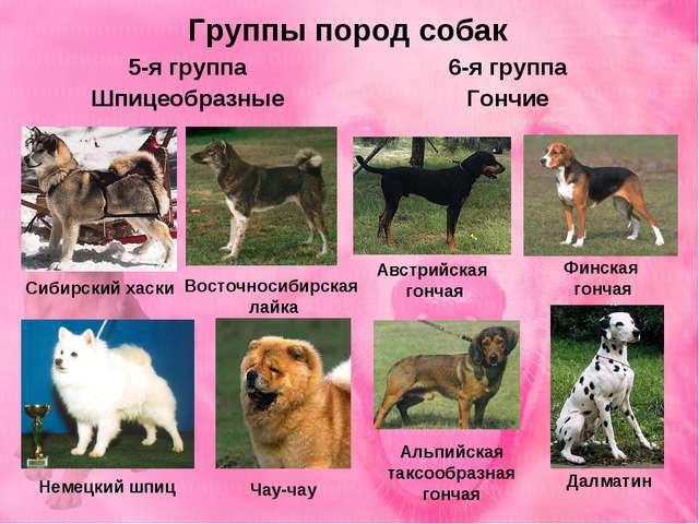 Группы пород собак 5-я группа Шпицеобразные 6-я группа Гончие Восточносибирск...