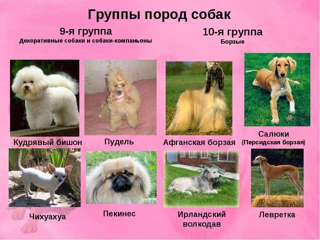 Группы пород собак 9-я группа Декоративные собаки и cобаки-компаньоны 10-я гр...