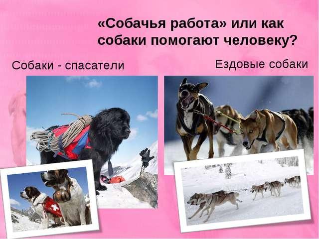 «Собачья работа» или как собаки помогают человеку? Собаки - спасатели Ездовые...