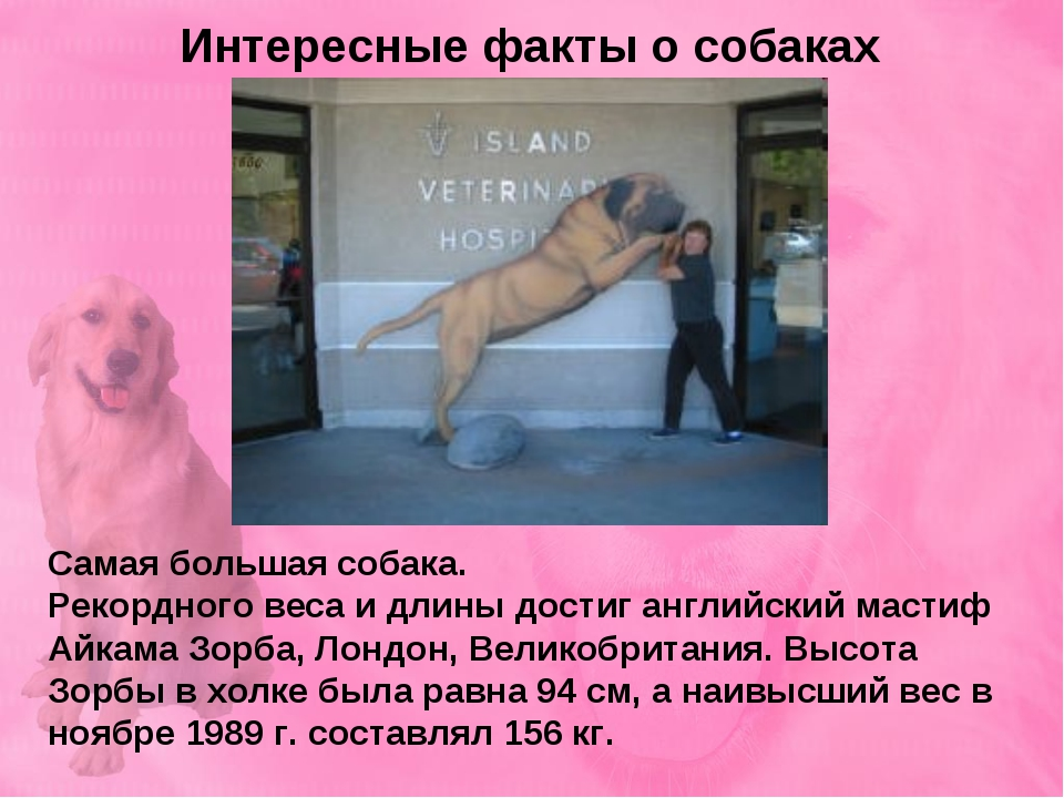 Картинки и интересные факты о собаках для детей