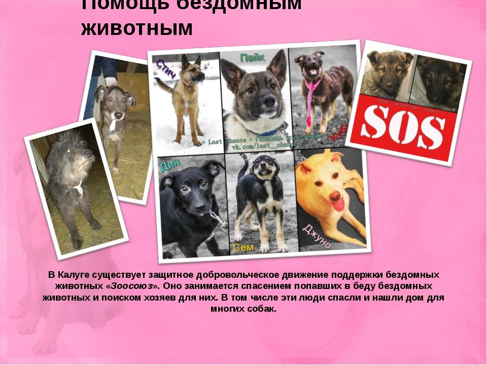 Помощь бездомным животным В Калуге существует защитное добровольческое движен...