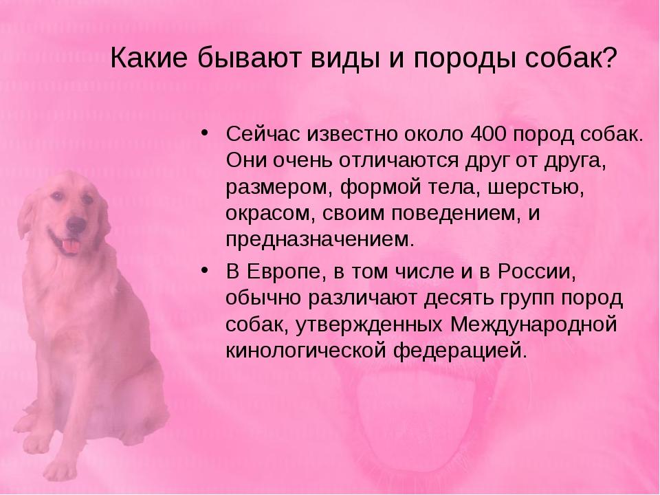 Какие бывают виды и породы собак? Сейчас известно около 400 пород собак. Они...