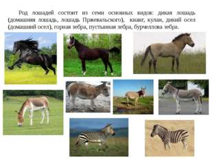Род лошадей состоит из семи основных видов: дикая лошадь (домашняя лошадь, л