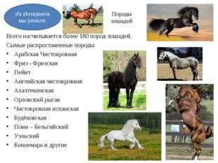 Породы лошадей Всего насчитывается более 180 пород лошадей. Сымые распростане