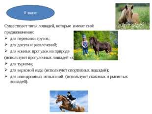Существуют типы лошадей, которые имеют своё предназначение: для перевозки гру