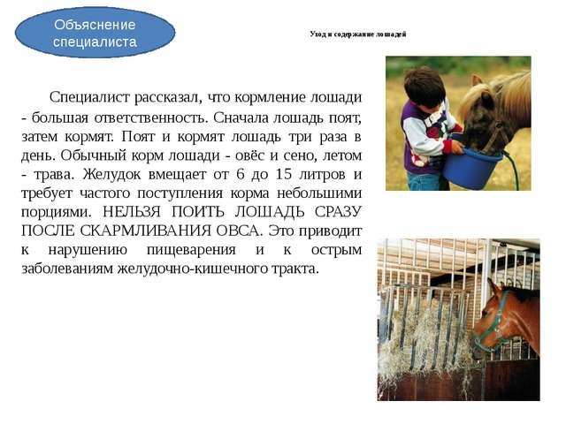 Уход и содержание лошадей Специалист рассказал, что кормление лошади - боль...