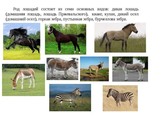 Род лошадей состоит из семи основных видов: дикая лошадь (домашняя лошадь, л...