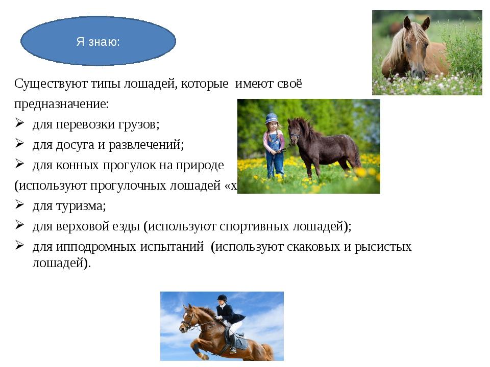 Существуют типы лошадей, которые имеют своё предназначение: для перевозки гру...