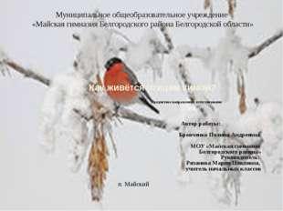 Как живётся птицам зимой? Предметное направление: естествознание Автор рабо