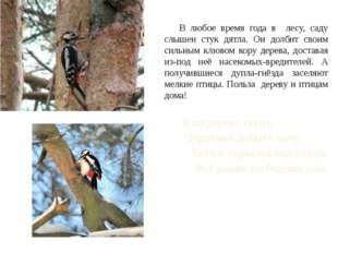В любое время года в лесу, саду слышен стук дятла. Он долбит своим сильным к