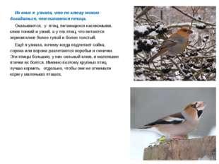 Из книг я узнала, что по клюву можно догадаться, чем питается птица. Оказыв