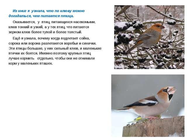 Из книг я узнала, что по клюву можно догадаться, чем питается птица. Оказыв...