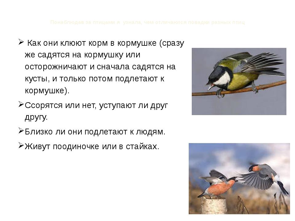 Понаблюдав за птицами я узнала, чем отличаются повадки разных птиц Как они кл...