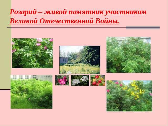 Розарий – живой памятник участникам Великой Отечественной Войны.