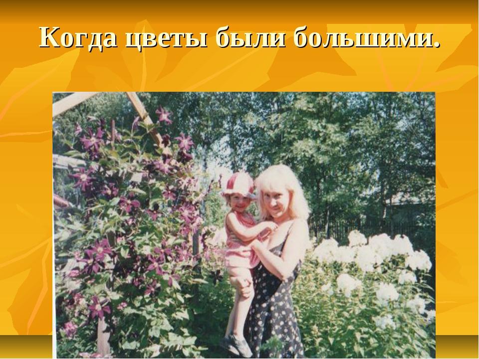 Когда цветы были большими.