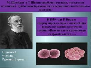 М. Шлейден и Т Шванн ошибочно считали, что клетки возникают путём новообразов