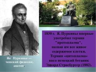 Ян Пуркинье — чешский физиолог, анатом. 1830 г. Я. Пуркинье впервые употребил