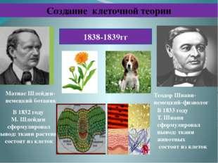 Создание клеточной теории Теодор Шванн-немецкий-физиолог 1838-1839гг В 1832 г