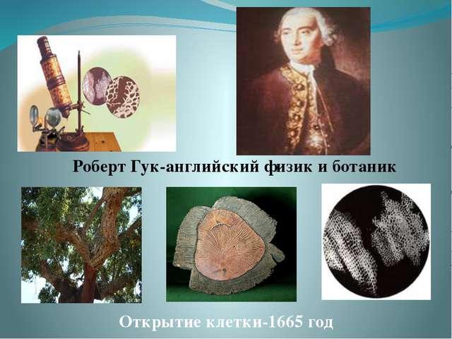 Роберт Гук-английский физик и ботаник Открытие клетки-1665 год