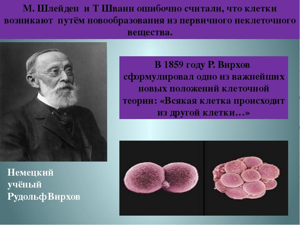 М. Шлейден и Т Шванн ошибочно считали, что клетки возникают путём новообразов...