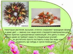 Некоторые растения, высыхая, отлично сохраняют природную форму и даже цвет —