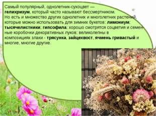 Самый популярный, однолетник-сухоцвет — гелихризум, который часто называют б