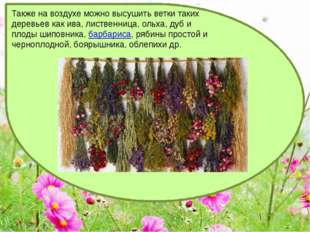 Также на воздухе можно высушить ветки таких деревьев как ива, лиственница, ол