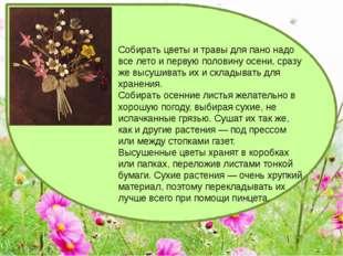 Собирать цветы и травы для пано надо все лето и первую половину осени, сразу