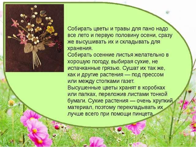 Собирать цветы и травы для пано надо все лето и первую половину осени, сразу...