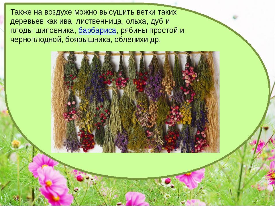 Также на воздухе можно высушить ветки таких деревьев как ива, лиственница, ол...