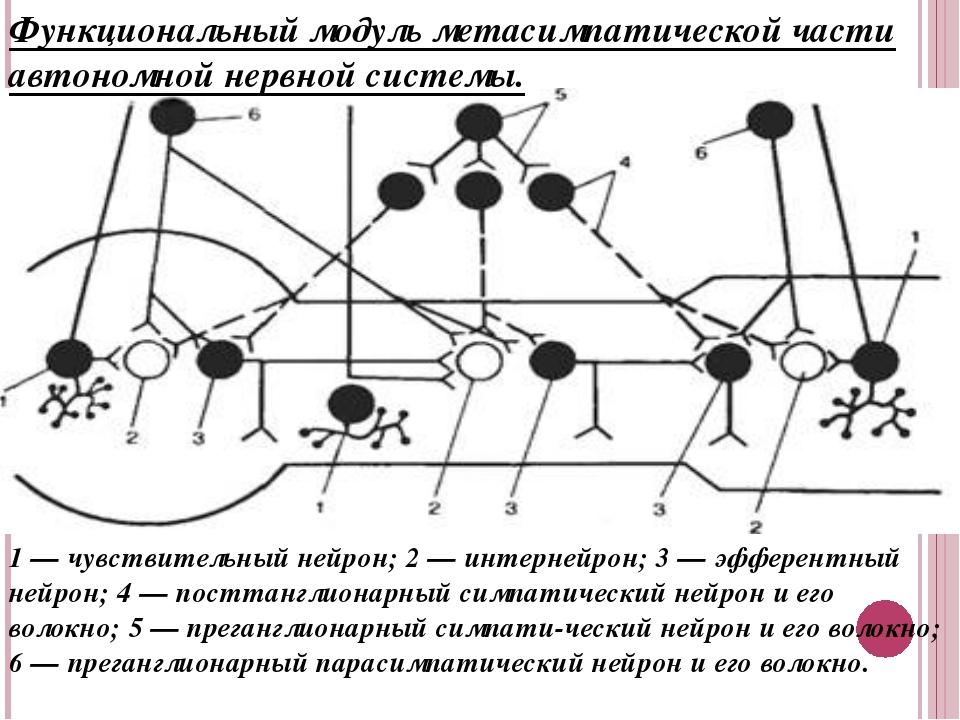 Функциональный модуль метасимпатической части автономной нервной системы. 1 —...