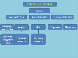 СТРОЕНИЕ ГЛОТКИ отделы НОСОГЛОТКА РОТОГЛОТКА ГОРТАНОГЛОТКА Евстахиевы трубы П