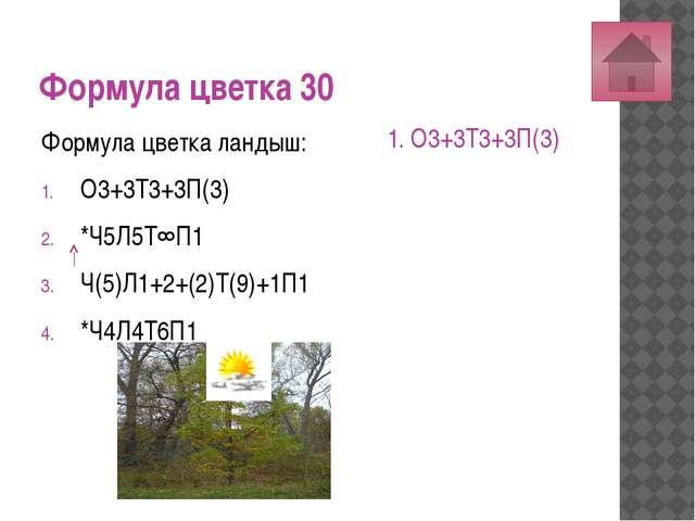 Формула цветка 50 Формула цветка дурман: О3+3Т3+3П(3) *Ч5Л5Т∞П∞ *Ч(5)Л(5)Т5П1...