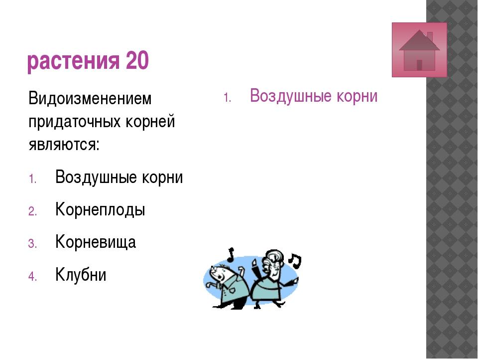 растения 30 Пыльцевое зерно сосны – это: Мегаспора Женский гаметофит Микроспо...