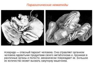Аскарида — опасный паразит человека. Она отравляет организм человека ядовитым
