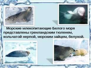 Морские млекопитающие Белого моря представлены гренландским тюленем, кольчат