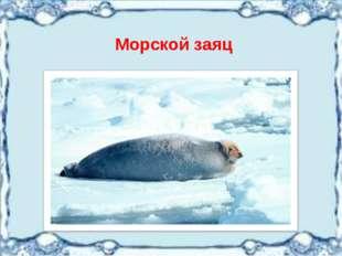 Морской заяц
