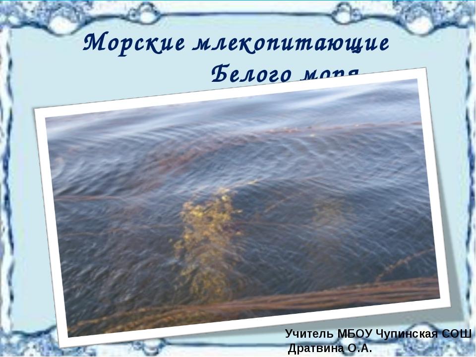 Морские млекопитающие Белого моря Учитель МБОУ Чупинская СОШ Дратвина О.А.