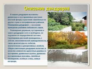 Описание дендрария В нашем дендрарии высажены древесные и кустарниковые расте