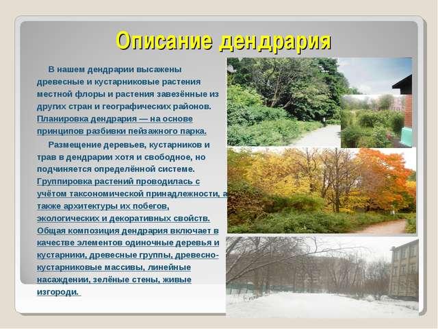 Описание дендрария В нашем дендрарии высажены древесные и кустарниковые расте...