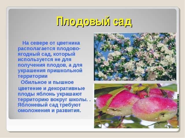 Плодовый сад На севере от цветника располагается плодово-ягодный сад, который...
