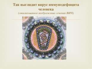 Так выглядит вирус иммунодефицита человека (стилизованное изображение сечения